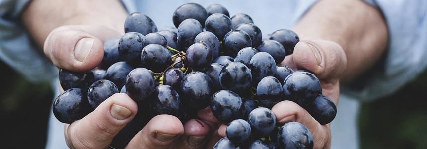 Surowce winiarskie